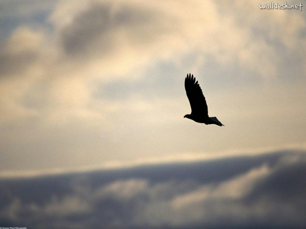 free-soaring-wallpaper-1